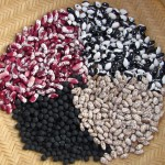 Jacob's Cattle, Calypso, Pinto, Black Garbanzo beans